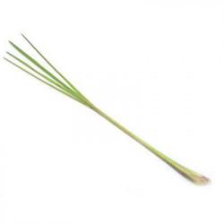 Lemon grass BIO - 15g