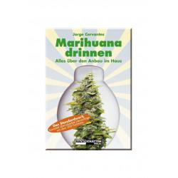 Marihuana drinnen -  Alles über den Anbau im Haus